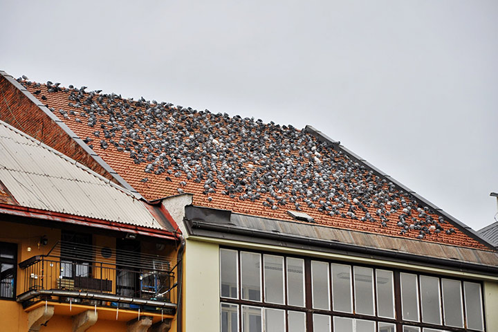 A2B Pest Control are able to install spikes to deter birds from roofs in Upminster.